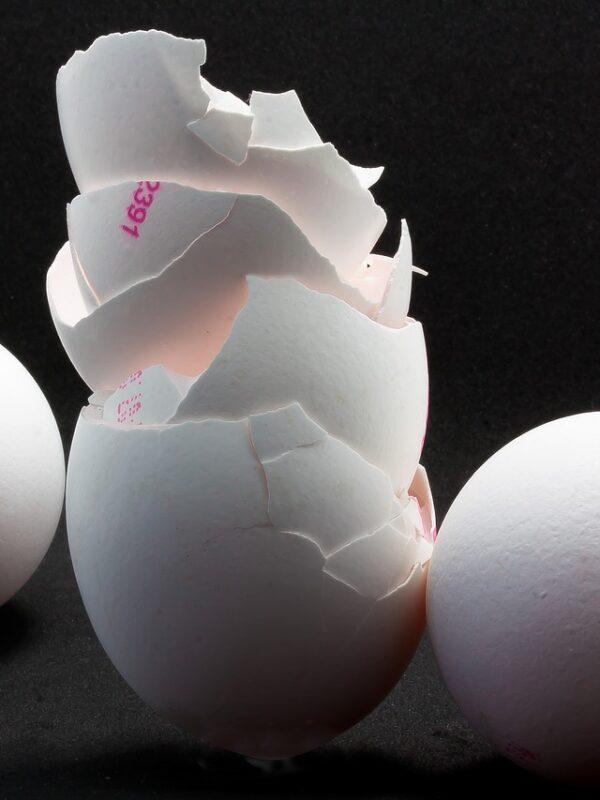 egg-4002016_1280